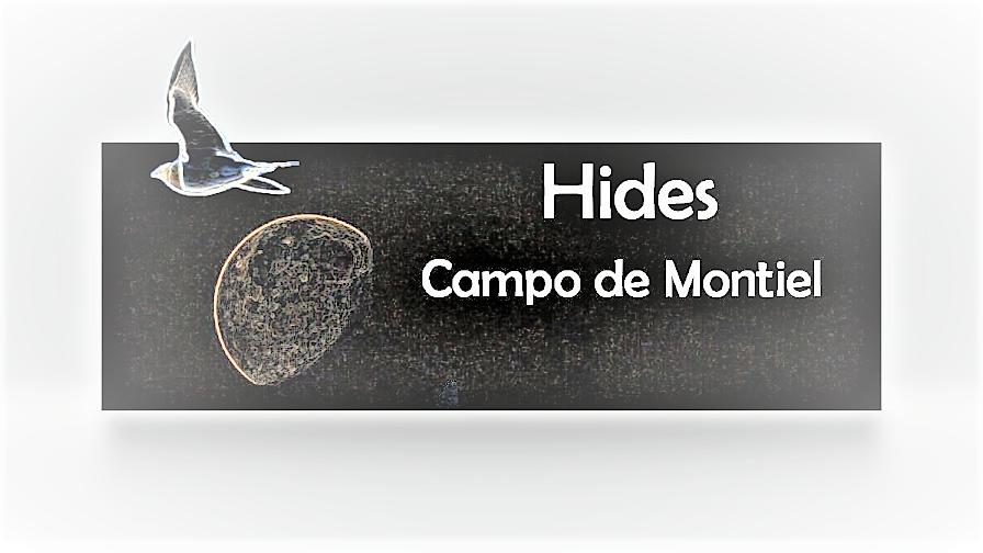 Hides Campo de Montiel